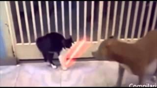 Джидаи. Приколы с кошками fanny cats