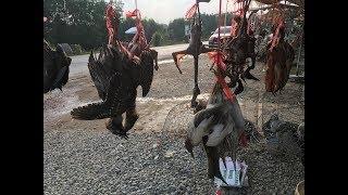 Chợ chim cò lớn nhất miền tây (P2) - Khám phá vùng quê
