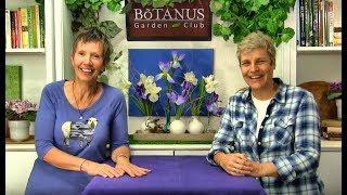 Episode 195 - Iris reticulata & Dutch Iris