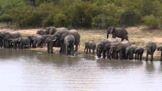 HD Kruger Safari Drone Video