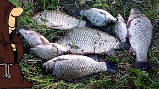ВОТ ЭТО ЛАПТИ Крупные караси на донку Рыбалка 2020