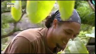 Wunder der Natur   Kauai 1 4 Die Garteninsel Hawaiis Doku