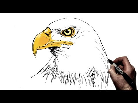 How To Draw An Eagle | Step By Step