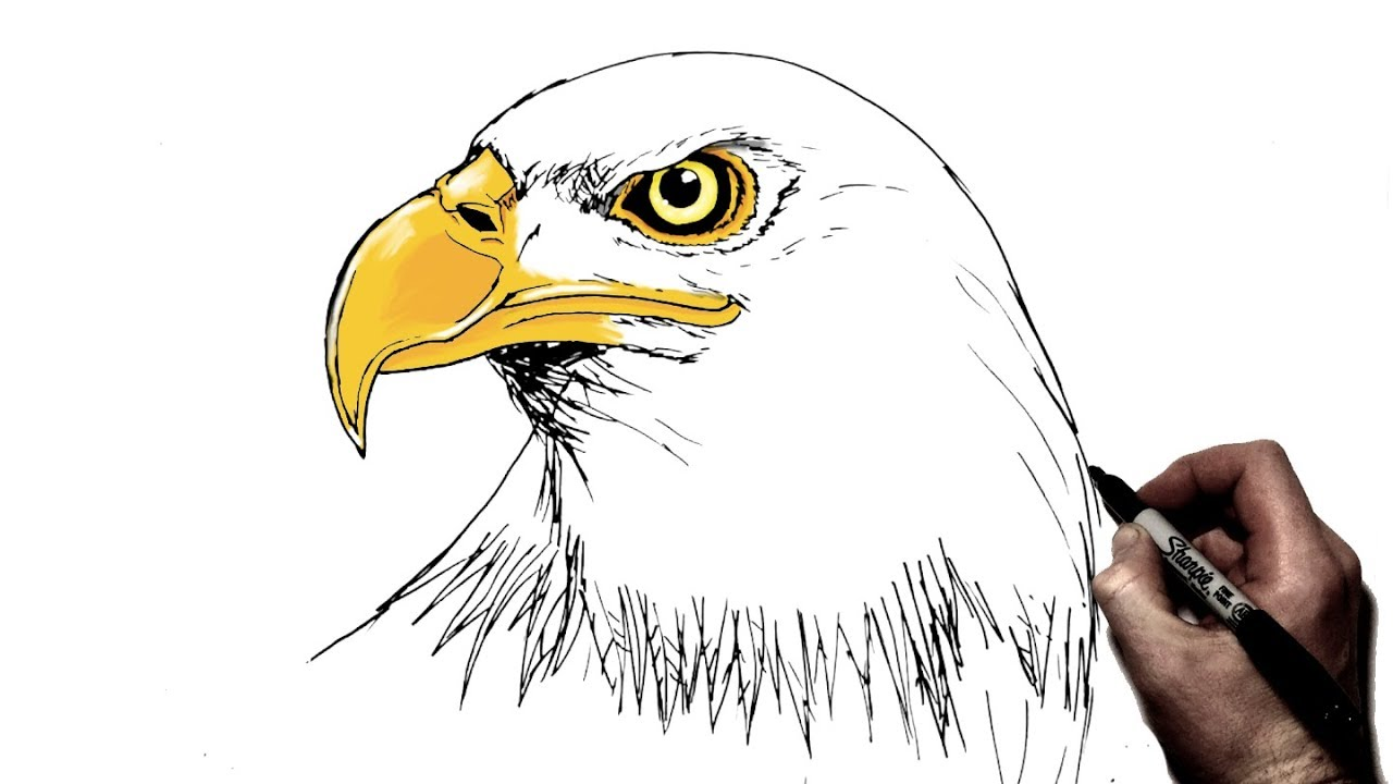 This is a photo of Remarkable Drawing Of Eagle