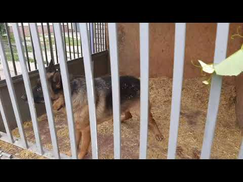 Репортер UA: В Запорожье отравили собак