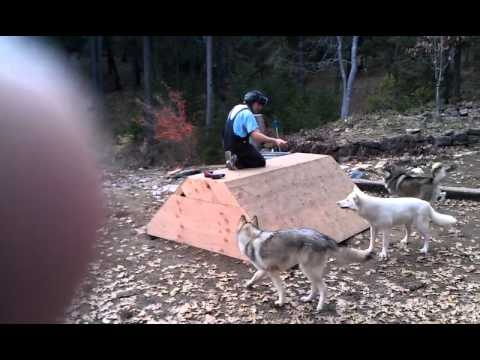 How to build a wolf den from scratch or an extra large dog house youtube - Underground dog houses ...