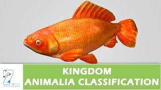 Kingdom Animalia Classification