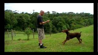 How To Train Your Dog - Lesson 3 - Natural Dog Teaching