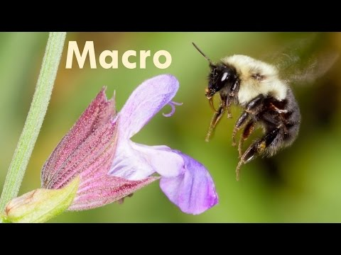 Tony & Chelsea LIVE: Macro Photography, St. Patrick's Day &
