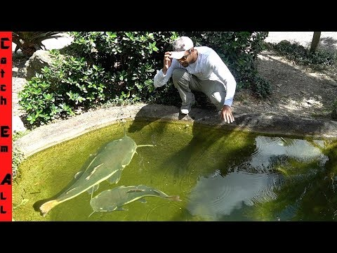 GIVING MY PETS AWAY To A MONSTER FISH ZOO POND! **ZWF Miami**