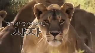 가젤과 사자, 생존과 먹이를 위한 질주 - 실행이 답이…
