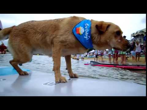 Man and Dog SUP Race | Australia Day SUP 2015