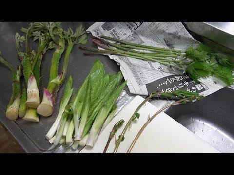採った山菜を料理して晩ごはん