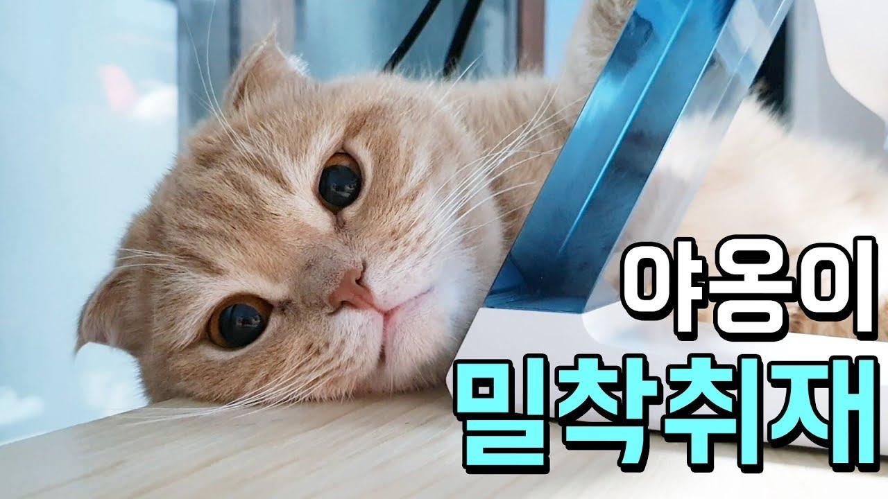 이쁜 고양이 밀착취재! 누룽지 안녕?! [도미네 고양이집]
