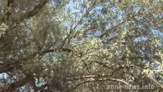 Война в Сирии. Бой за оливковую рощу. Июнь 2013.(, 2013-06-24T14:49:01.000Z)
