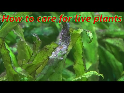 How to care for live plants in your aquarium. For beginners.