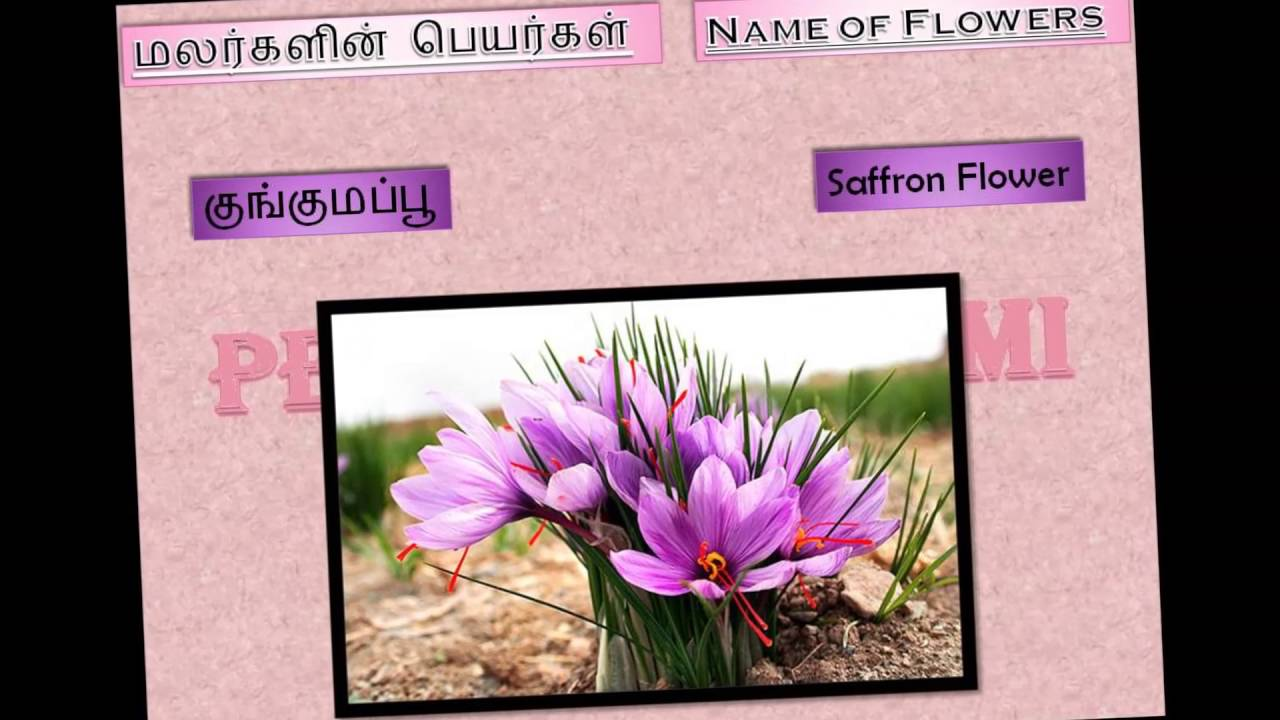 Name Of Flowers In Tamil Part Iii Youtube