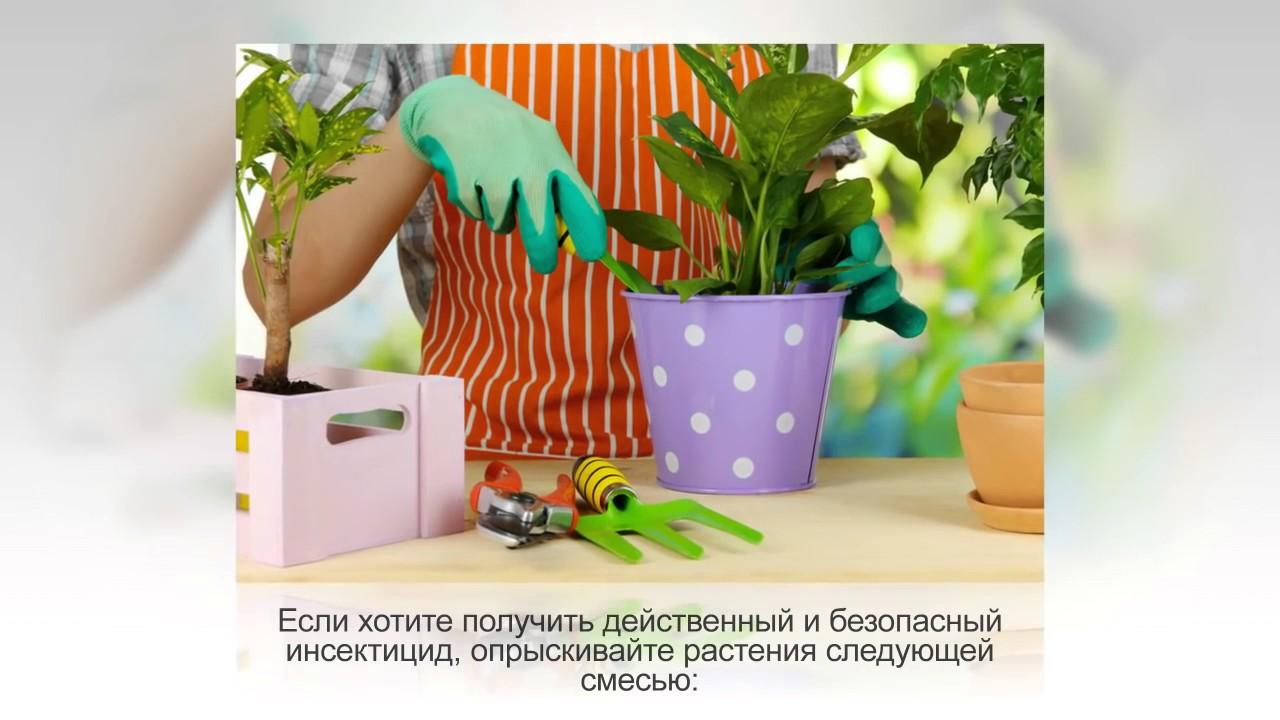Перекись для комнатных цветов