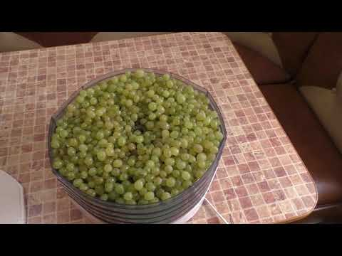 Виноград.Делаем изюм из домашнего винограда.