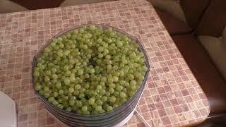 Виноград .Делаем изюм из домашнего винограда.