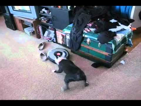 Dog vs. Roomba®