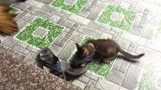 The morning of my little naughty kitten - funny cat fail video compilation 2018