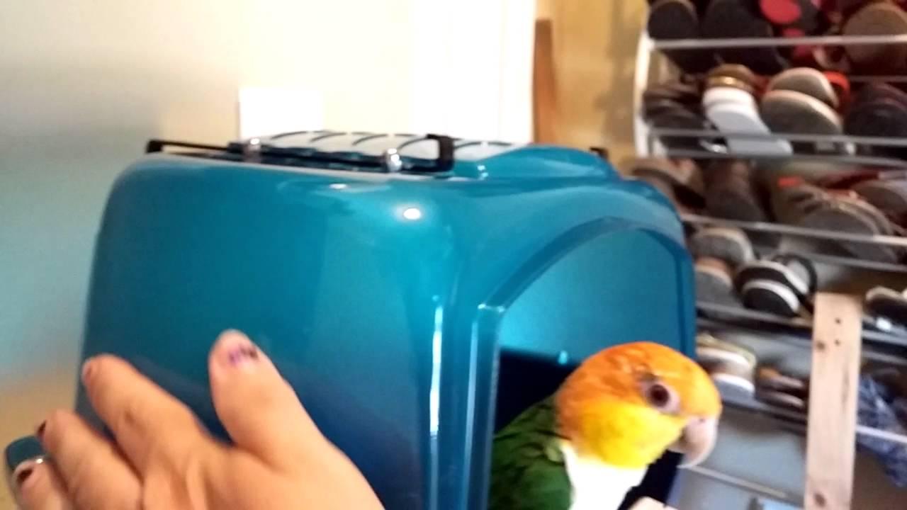Splash Giant extra large Bird bath by Savic - YouTube