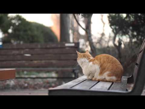 고양이 좋아하는 음악  3시간 연속  –3 HOURS OF CAT MUSIC – RELAXING MUSIC FOR CATS