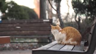 고양이 좋아하는 음악  3시간 연속  --3 HOURS OF CAT MUSIC - RELAXING MUSIC FOR CATS
