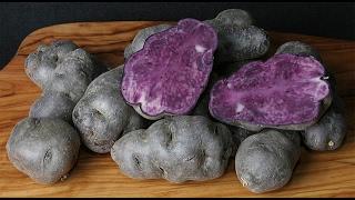 10 Amazing Health Benefits of Purple Potatoes!