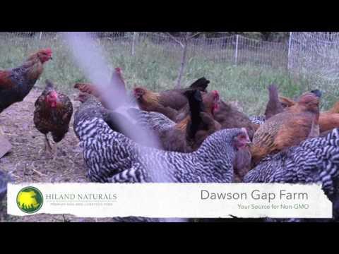 Hiland Naturals Premium Non GMO Livestock Feed