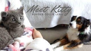 보더콜리 레나 귀여운 새끼 고양이와 첫 만남 | 강아지 고양이 유튜버