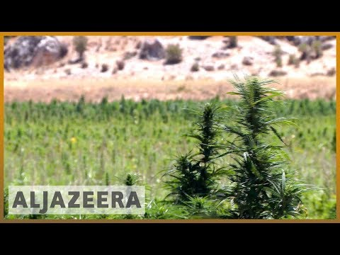 🇱🇧 A push in Lebanon to legalise cultivation of medical cannabis | Al Jazeera English