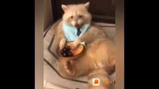 Top funny Pets Video , funniest cutest Animals, हेलो एप video With Hindi funny Songs
