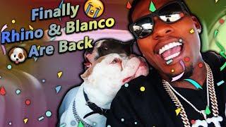 I Finally Got My Dogs Rhino & Blanco Back!