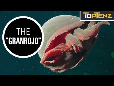 Top 10 Creepy Creatures of the Deep