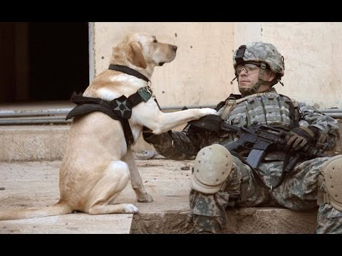 Dogs Welcoming Soldiers Home Part 3 2014 [NEW HD]
