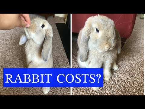 How Much Do Rabbits Cost?