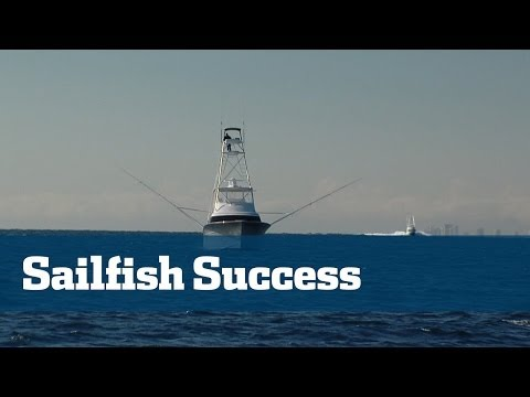 How To Catch Sailfish South Florida Tactics - Florida Sport Fishing TV