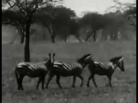 Africa Speaks 1930