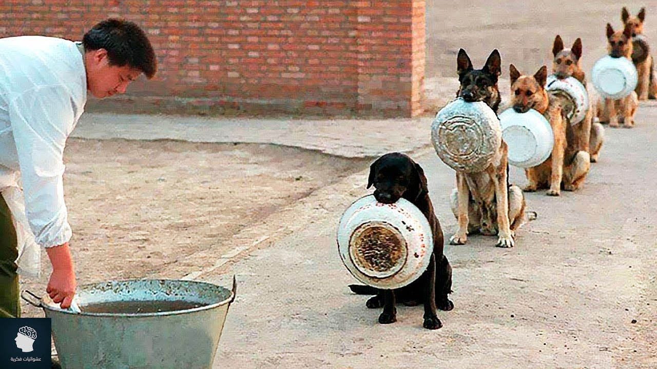 أفضل الكلاب المدربة في العالم..!!