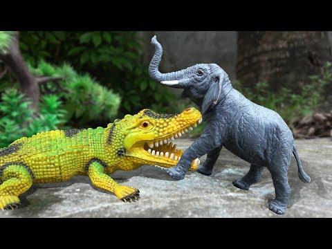 Câu chuyện về tình bạn giữa các con vật FMC A968T