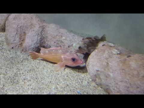 Monterey Bay Aquarium Part 1