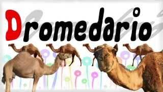 Alfabeto degli animali per bambini, impara l'alfabeto italiano e i versi degli animali