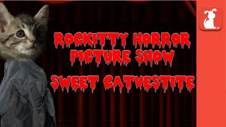 Rocky Horror Picture Show - Sweet Transvestite (Puppy & Kitten Edition)