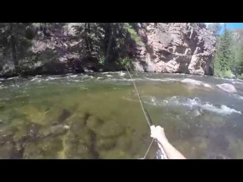 Colorado Fly Fishing 2014: Big Rainbow Trout