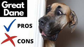 Great Dane Pros And Cons | The Good AND The Bad!!