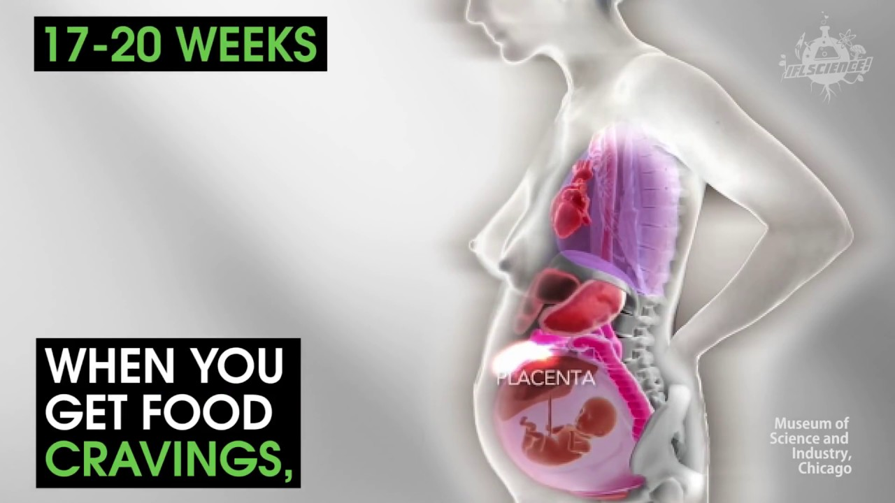 This Horrifying Animation Shows You How A Womans Organs Move During ...