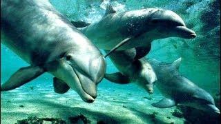 Científicos se asombran por increíble comportamiento de Delfines