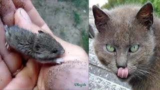Ленивые деревенские коты